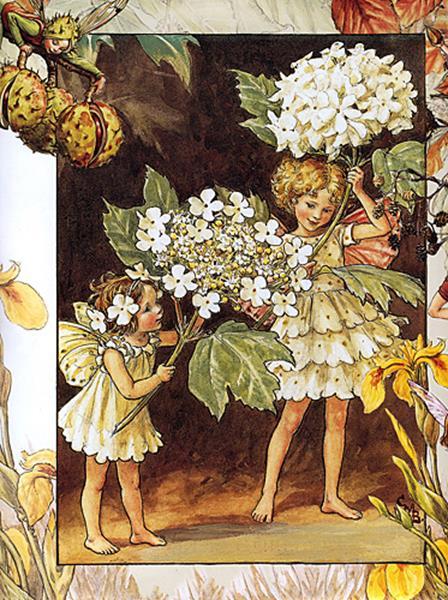 cicely barker_the guelder rose fairy_med (Copy)