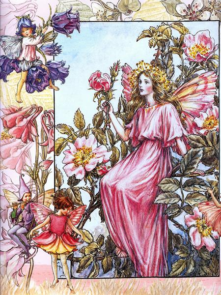 cicely barker_the wild rose fairy (Copy)
