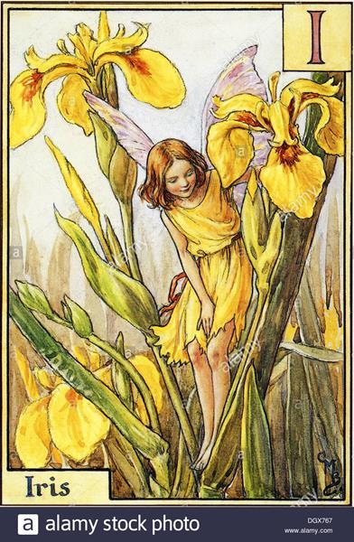 flower-fairies-illustration-by-cicely-mary-barker-the-iris-fairy-1934-DGX767 (Copy)