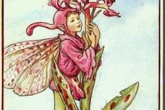 a9ea927d110c3a5d8470d18c7b4d254a--cicely-mary-barker-flower-fairies (Copy)